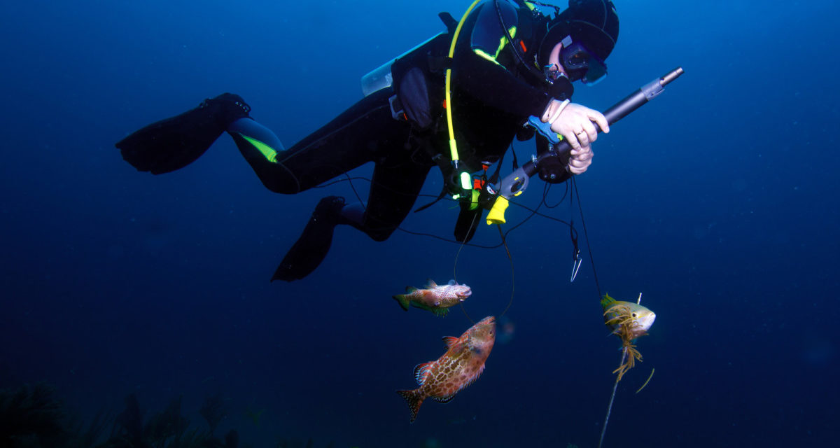 10 Fascinating Facts About the History of Spearfishing
