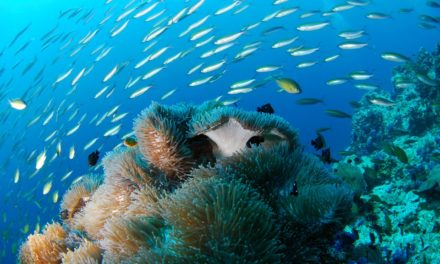 The Top Guide To Scuba Diving In The Caribbean