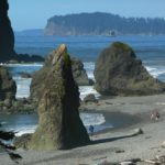 Washington Spearfishing: The Best Places To Spearfish In Washington (and types of fish)
