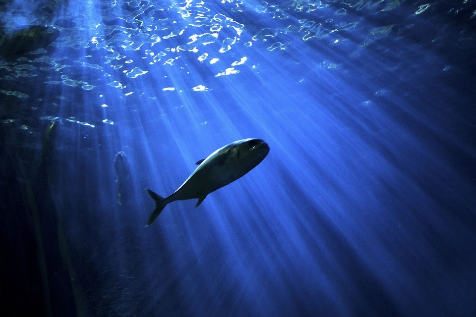 Spearfishing vs. Line Fishing: Which One Should You Consider?